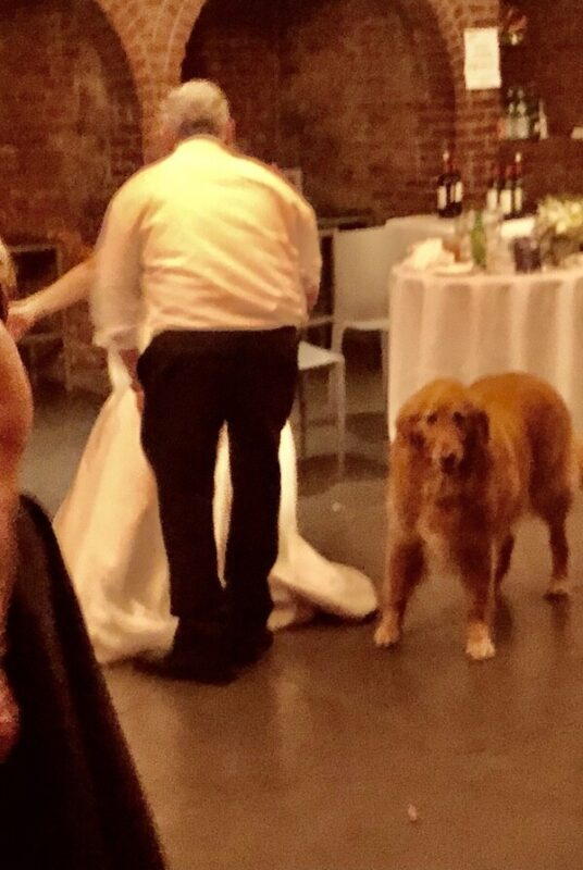 first dance with Dog at wedding at LIC the Foundry